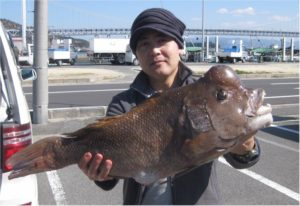 0315-yukumoto-kobudai-67cm-b