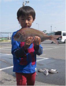 0515-morimoto-madai40cm-b